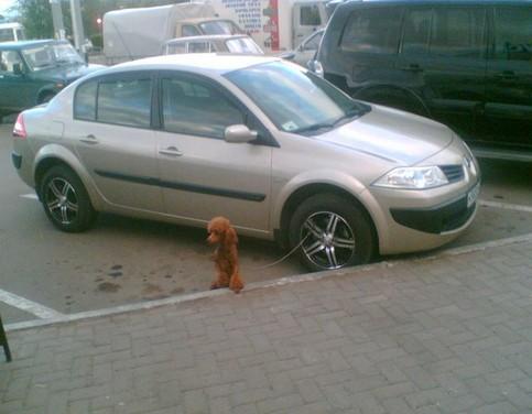 Ein Hund ist an der Felge eines Autos angeleint.