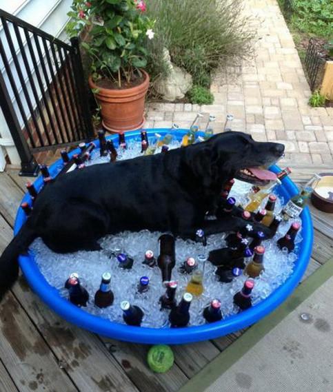 Ein Hund hat es sich auf einem großen Plastikbehälter gemütlich gemacht, der mit Eis und gekühlten Getränken gefüllt ist.