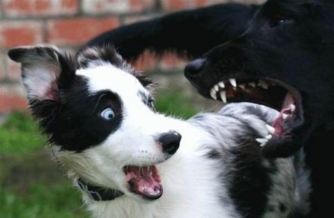Ein Hund erschrickt einen anderen.