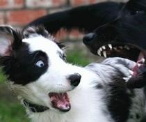 Hundeschreck