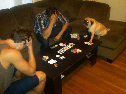 Ein Hund scheint mit zwei Männern Poker zu spielen. Er hat fast alle Chips, die beiden Männer schlagen die Männer über dem Kopf zusammen, da sie scheinbar verloren haben.