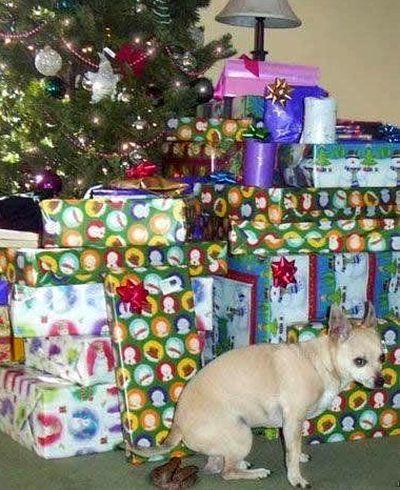 Ein Hund setzt einen Hundehaufen neben die Geschenke unter den Weihnachtsbaum.