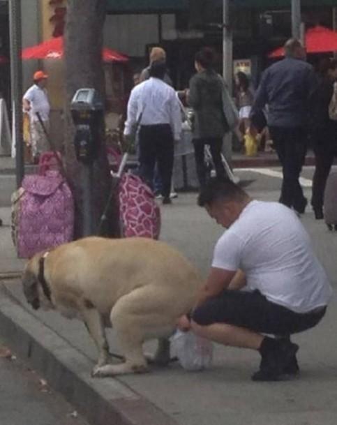 Ein Hund erledigt sein großes Geschäft. Sein Herrchen hält währenddessen eine Tüte unter das Hinterteil des Hundes.