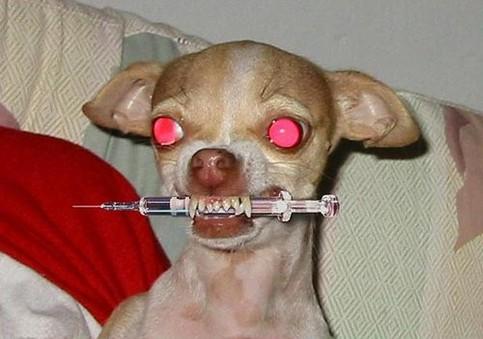 Ein Hund mit roten Augen hat eine Spritze im Maul und sieht ziemlich gefährlich aus.