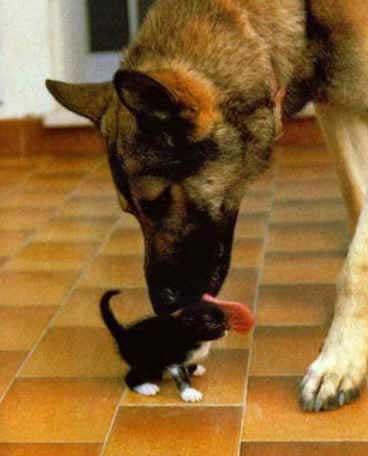 Ein Hund schleckt ein Kätzchen.