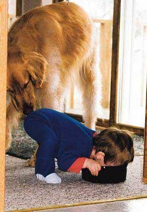 Ein Hund schnüffelt am Po eines Kindes, das an einem Hundetopf schnüffelt