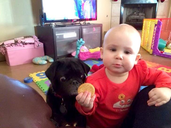 Ein Junge hält einen Keks in der Hand. Hinter ihm steht ein Hund und starrt gierig auf den Keks.