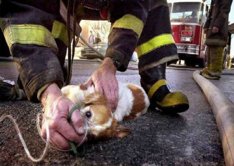Ein Hund wird von einem Feuerwehrmann beatmet.