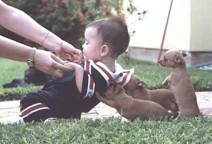 Hunde heben ein Kleinkind hoch.