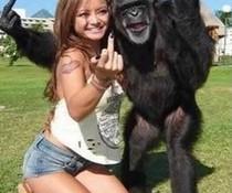 Cool mit Affe
