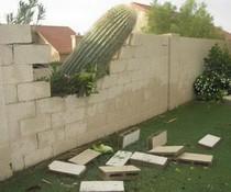 Kaktus-Fall