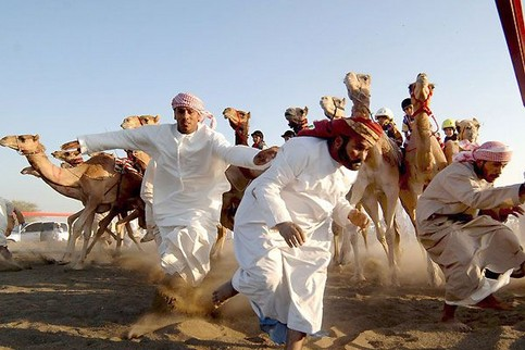Mehrere Kameltreiber fliehen vor einer Horde Kamele.