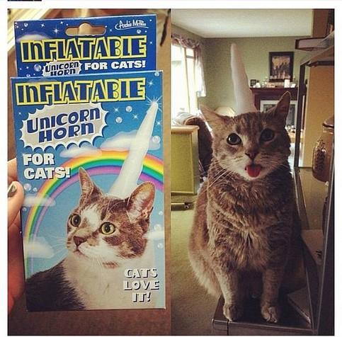 Eine Katze hat ein aufblasbares Horn aufgesetzt. So soll die Katze wie ein Einhorn aussehen.