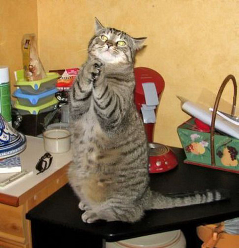 Eine Katze scheint zu beten.