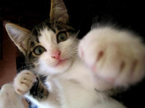 Eine Katze scheint mit ihrer Pfote zu boxen.