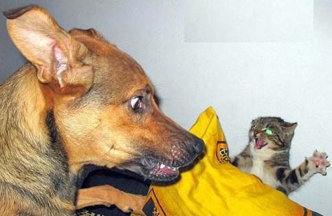 Eine Katze erschreckt einen Hund.