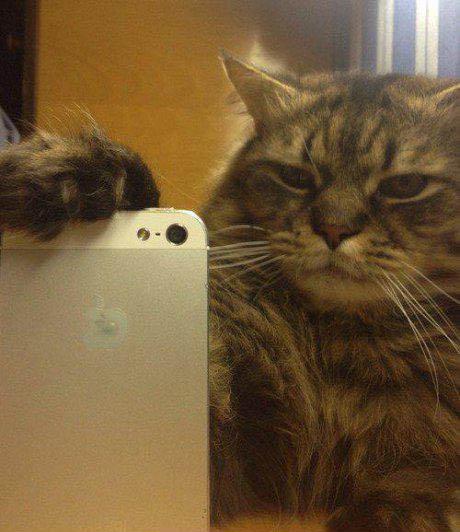 Eine Katze hält ein iPhone in ihrer Pfote. Es sieht so aus, als würde sie ein Foto machen.