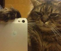 Katze fotografiert