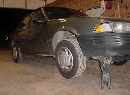 Eine Katze scheint mühelos ein Auto hochzuheben.