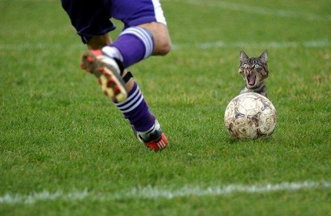 Eine Katze schaut hinter einem Fußball hervor, den ein Fußballer trit.