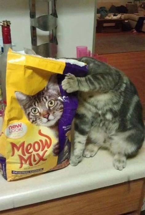 Eine Katze hält ihren Kopf hinter eine Tüte mit Katzenfutter. Die Tüte ist so bedruckt, dass es scheint als würde der Kopf der Katze auf der Tüte sein.
