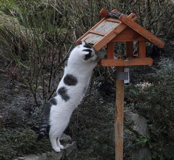 Eine Katze steht aufrecht auf den Hinterpfoten und klaut Futter aus einem Vogelhaus.