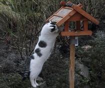 Katzenfutterhaus