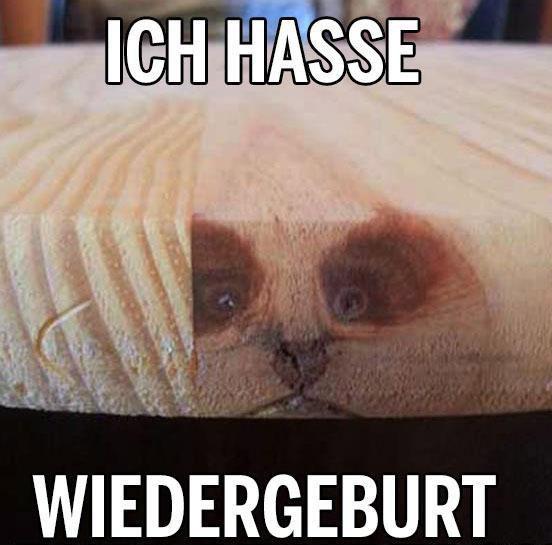 """In einem Holzbrett sieht die Maserung aus wie ein Katzengesicht. Dazu steht der Text: """"Ich hasse Wiedergeburt"""""""