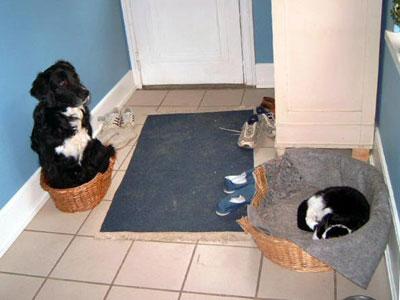 Eine Katze liegt im Korb eines Hundes, während dieser im Katzenkorb liegt
