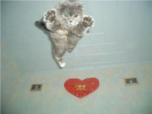 Eine Katze im Sprung.