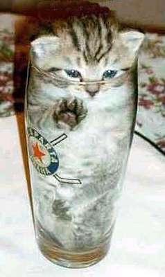 Eine Katze in einem Bierglas.