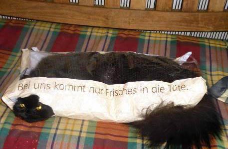 """Eine Katze hat es sich in einer Brötchentüte gemütlich gemacht. Auf der Tüte steht """"Bei uns kommt nur Frisches in die Tüte."""""""