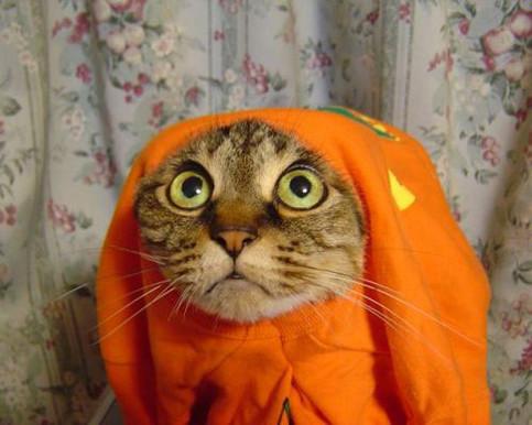 Eine Katze in einem T-Shirt schaut sehr süß.