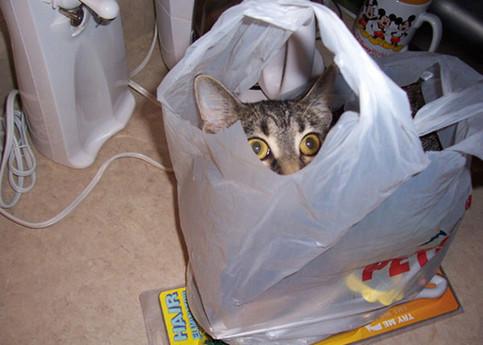 Ein Katze schaut aus einer Einkaufstüte heraus.