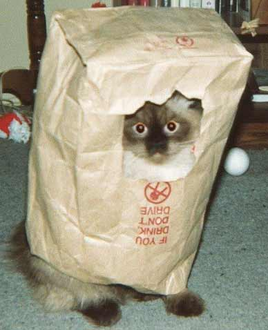 Eine Katze schaut durch ein Loch aus einer Tüte.