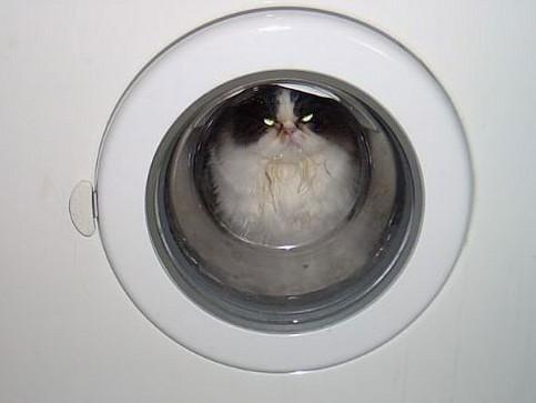Eine Katze in einer Waschmaschine.