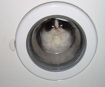 Waschkatze