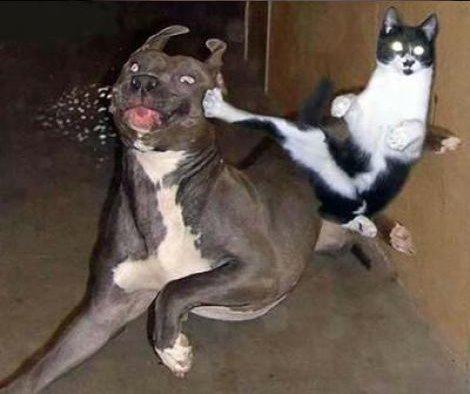 Eine Katze tritt einem Hund mit einem Kick das Futter aus dem Maul