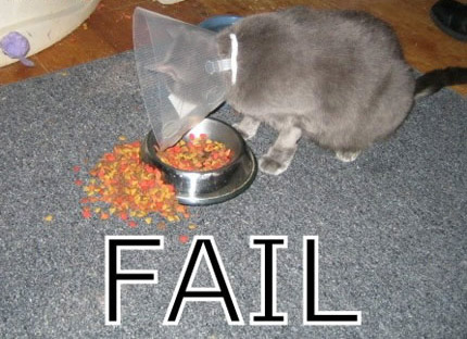 Eine Katze trägt eine Halskrause und schafft es durch die Krause nicht, Futter aus dem Napf zu essen.