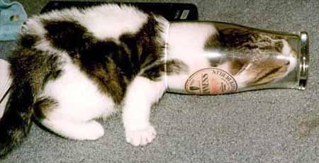 Eine Katze hat ihren Kopf in ein Glas gesteckt.