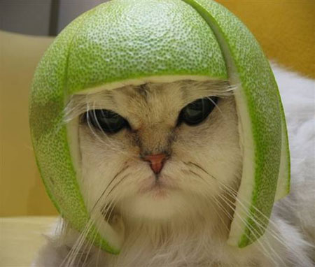 Eine Katze mit einem Helm, der aus einer Melone geschnitzt ist.
