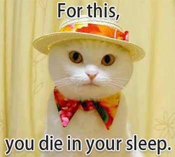 Eine Katze trägt einen Hut und ein Halstuch.