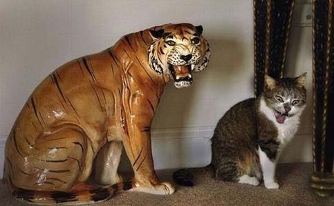 Eine Katze sitzt neben einem Tiger aus Keramik und macht eine sehr ähnliche Pose.