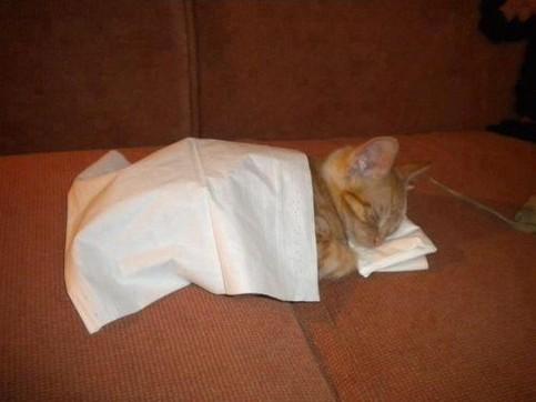 Eine kleine Katze liegt auf einem Sofa und schläft. Dabei liegt ihr kopf auf einem Kissen und sie ist mit einer Decke zugedeckt.
