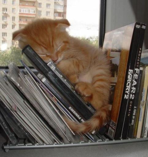 Eine kleine süße Katze schläft auf einer Fensterbank zwischen CD-Hüllen.