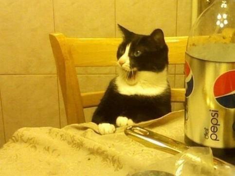 Eine Katze sitzt an einem Tisch und schaut lustig aus.