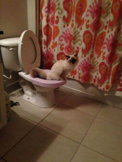 Eine Katze sitzt auf einem Klo.
