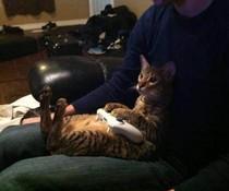 Katze zockt