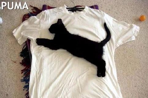 Eine Katze liegt so auf einem T-Shirt, dass ein Puma-Logo entsteht.