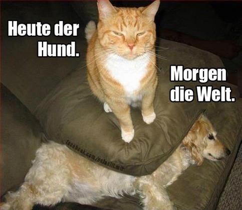 """Eine Katze thront auf einem Kissen, unter dem ein Hund liegt. Dazu der Bildtext: """"Heute der Hund. Morgen die Welt."""""""